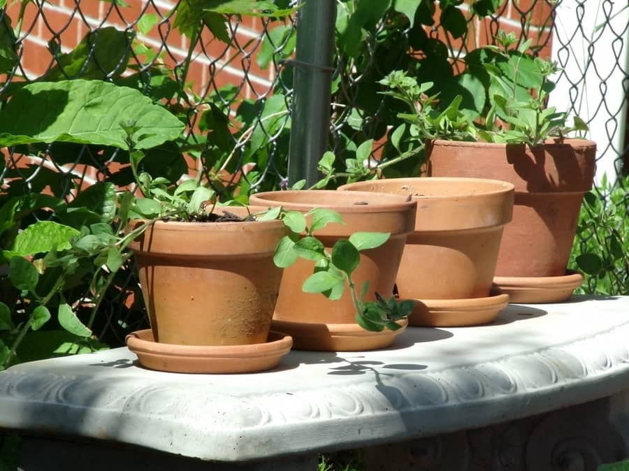 Plastic, Terra-cotta, or Paper Pots: Which is the best?